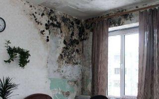 Как быстро и эффективно избавиться от влаги и плесени в доме или квартире