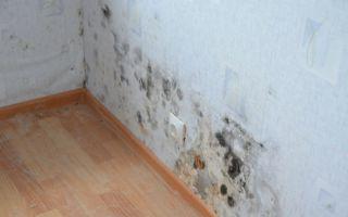 Как удалить лишнюю влажность в доме