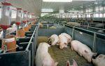 Как устраивается вентиляция в животноводческом помещении