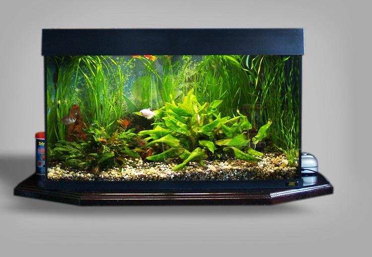 Универсальный интерьерный элемент - аквариум