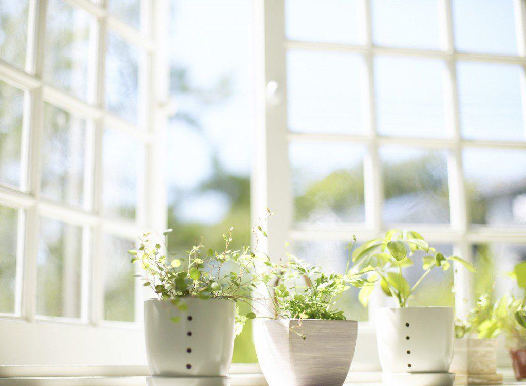 Комнатные цветы - это не только красиво, но и полезно