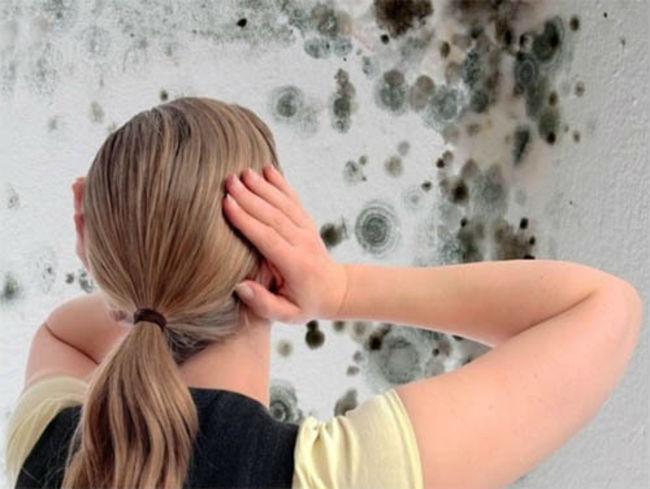 Чем покрыть стены после грибка
