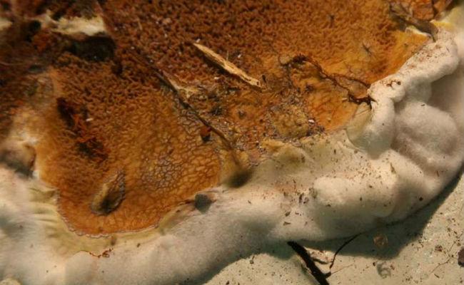 Наличие плесени и грибка в погребе