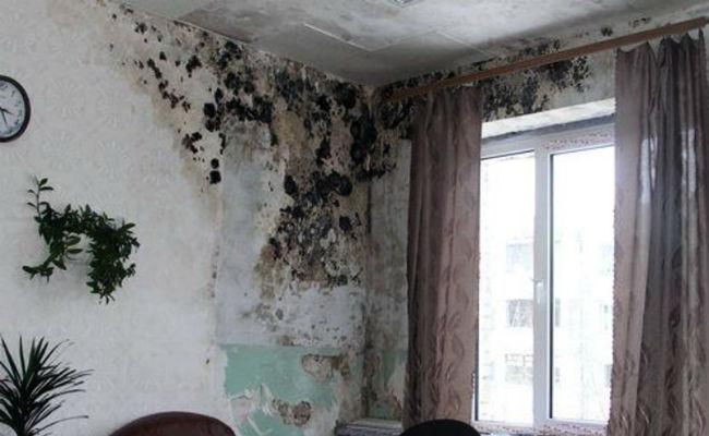 Отсырела стена в квартире