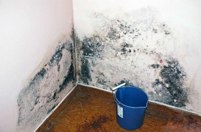 Сырость на стенах под обоями