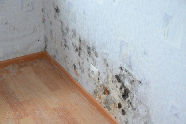 Сырость на стенах